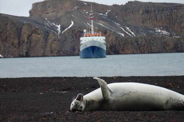 Fauna antartica
